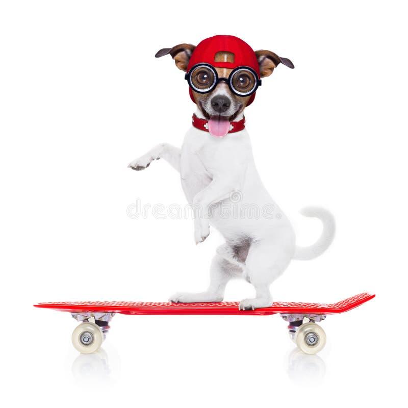 Skateboradåkarepojkehund royaltyfri bild