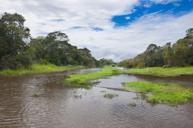 Skattskyldig flod av amasonen royaltyfri fotografi