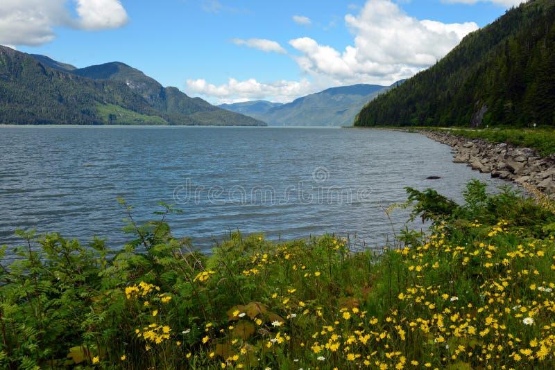 Skeena河和花在不列颠哥伦比亚省,加拿大 库存照片