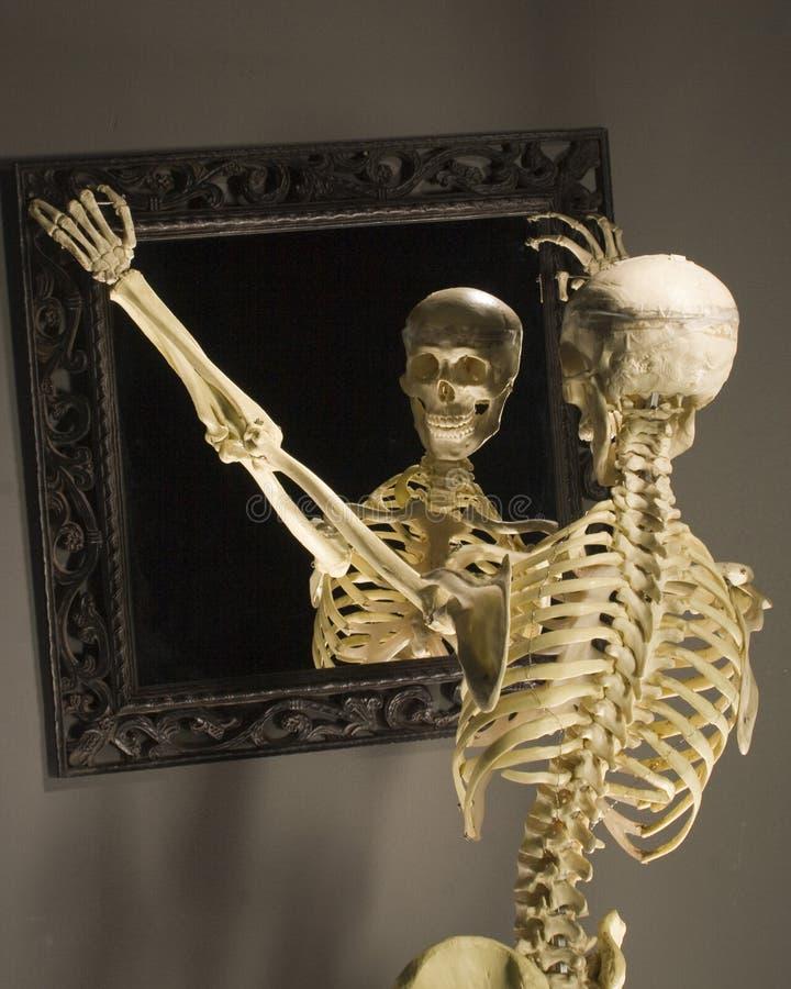 Free Skelaton Stock Images - 35392024
