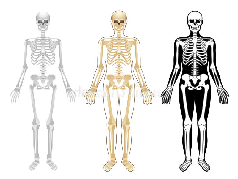Skelet royalty-vrije illustratie