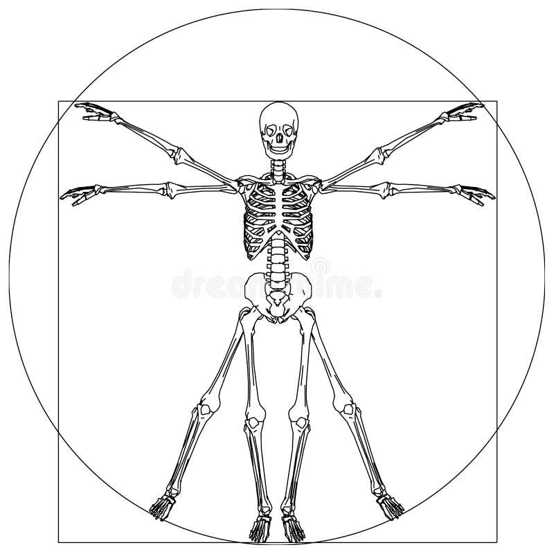 Skelet vector illustratie