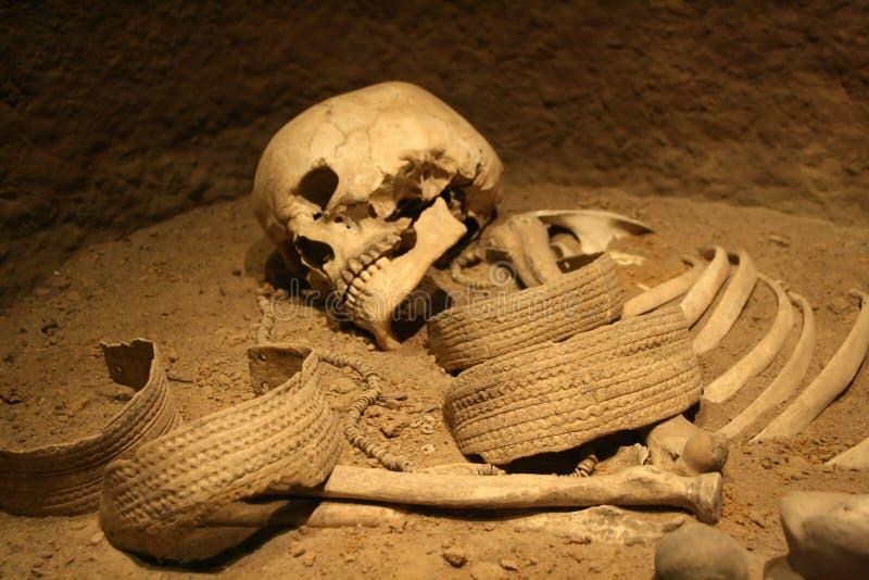 Skelet stock foto