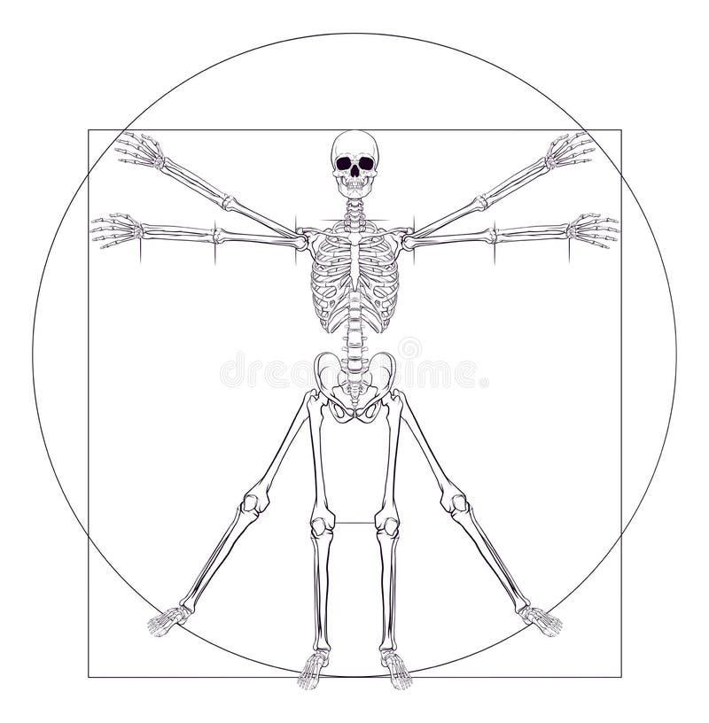 Skelet DA Vinci Vitruvian Man stock illustratie