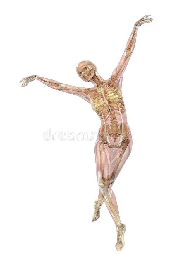 Skelet met Spieren - het Ballet stelt vector illustratie