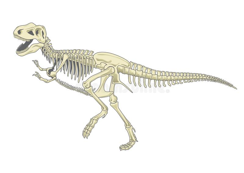 Skelet t -t-rex vector illustratie
