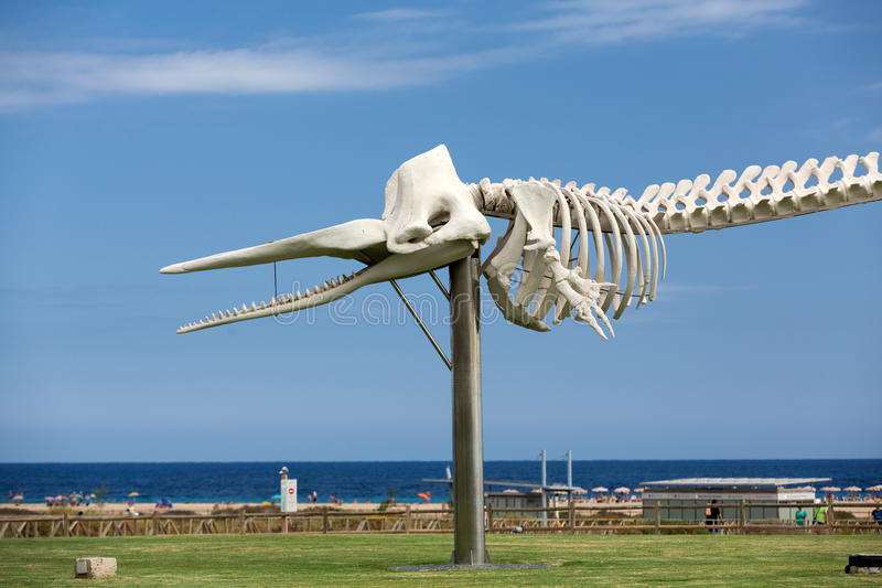 Skelet van een Potvis in Morro Jable op het eiland Fuerteventura royalty-vrije stock afbeeldingen