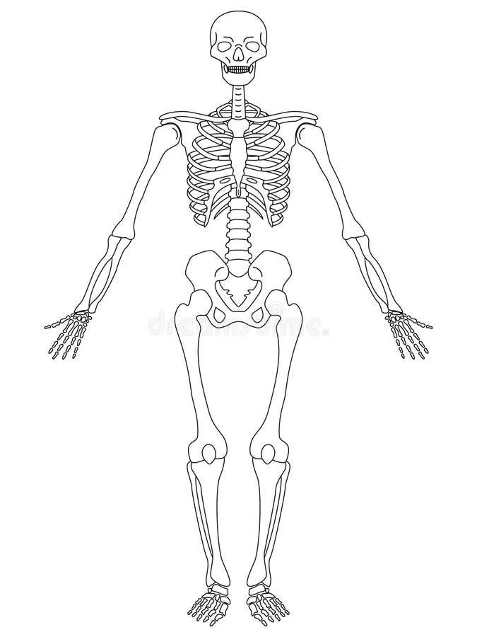 Kleurplaat Dood Skelet Vooraanzicht Vector Illustratie Illustratie