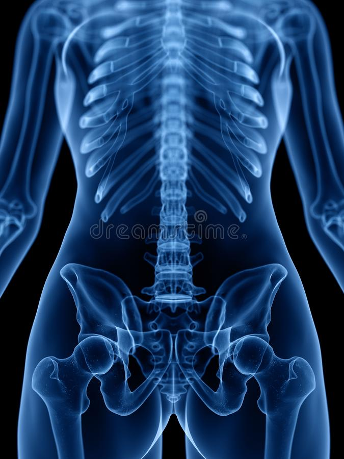 Skeletachtig vector illustratie