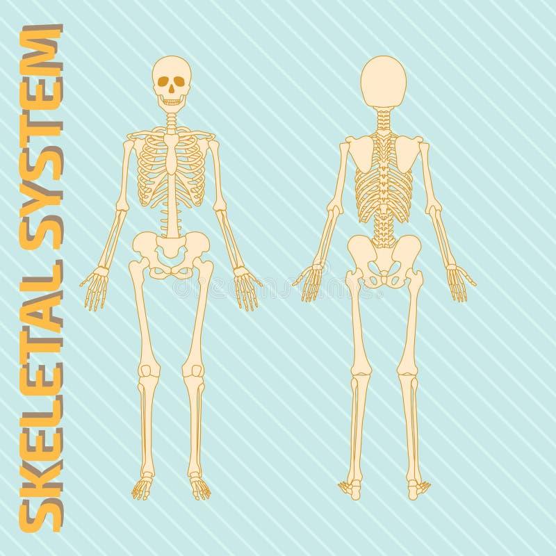 Skeletachtig systeem vector illustratie