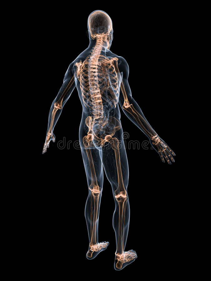 Skeletachtig systeem stock illustratie