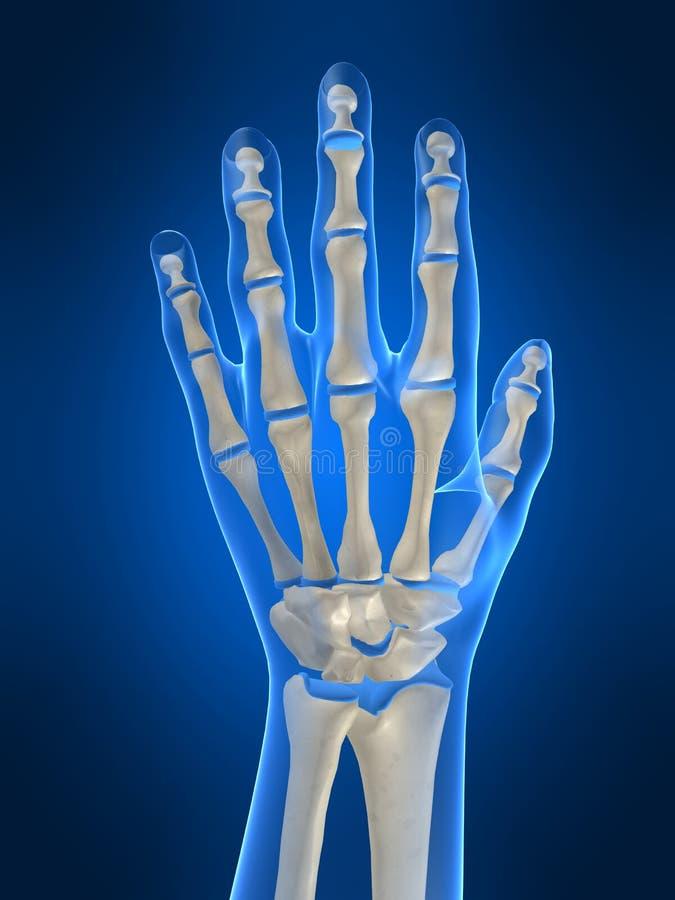 Skeletachtige hand royalty-vrije illustratie