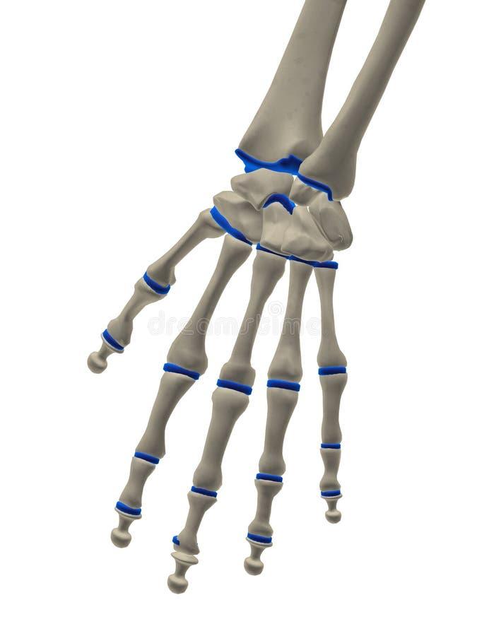Skeletachtige hand vector illustratie