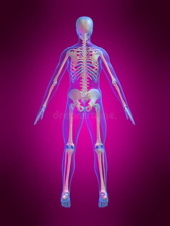 Skeletachtige rug vector illustratie