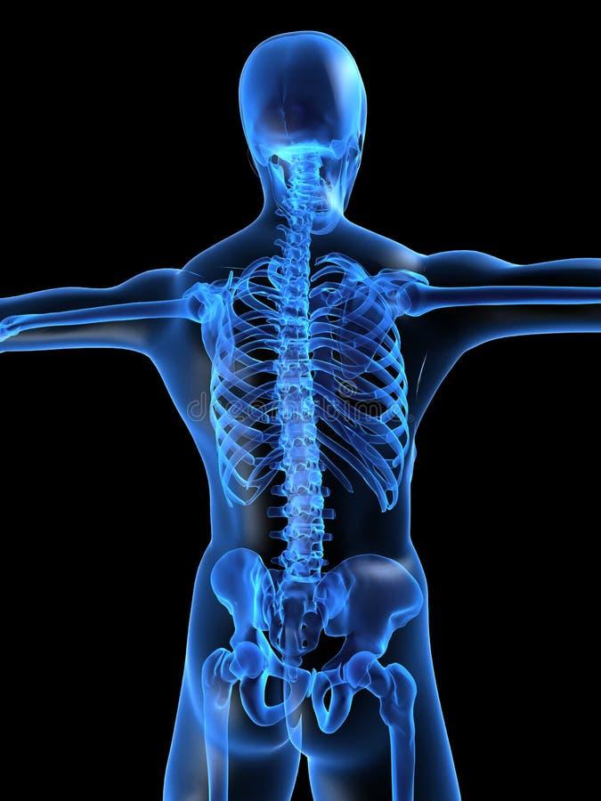 Skeletachtige rug stock illustratie