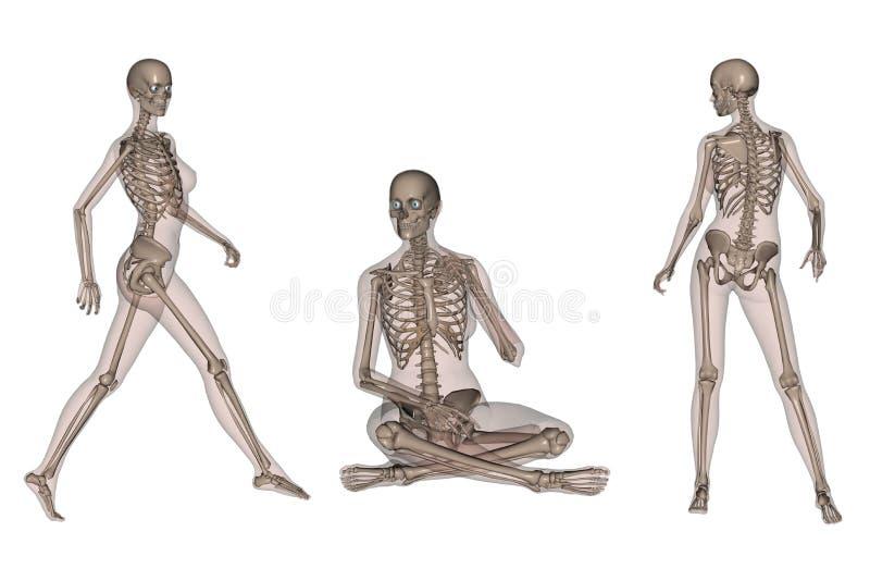 skeletal huvuddelkvinnlig stock illustrationer
