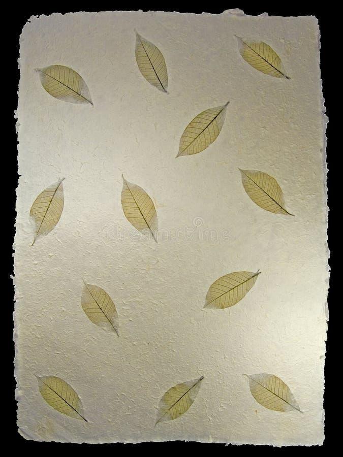 Skeletal Leaves Pattern 1 royalty free stock photo