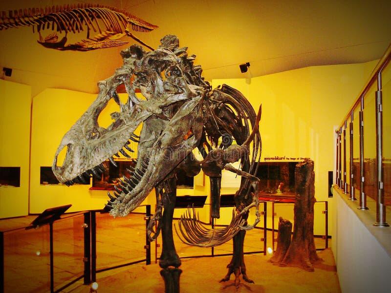 skeletaldinosaur στοκ εικόνες