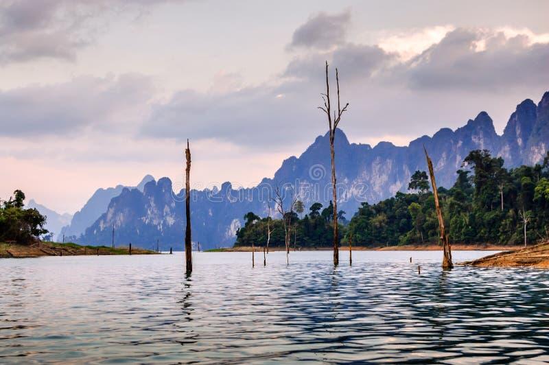 Skeletbomen in water bij schemer, Khao Sok National Park stock foto's