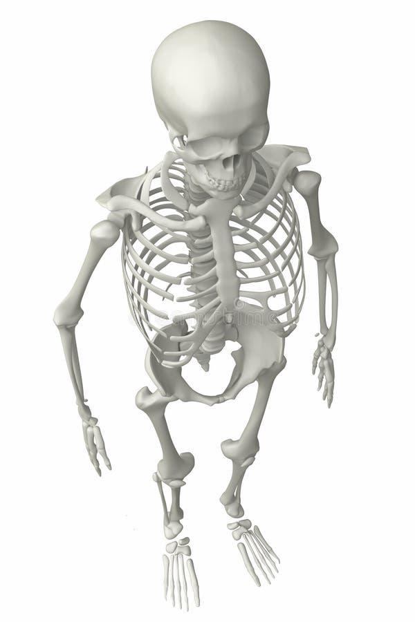 Skeleton vector illustration