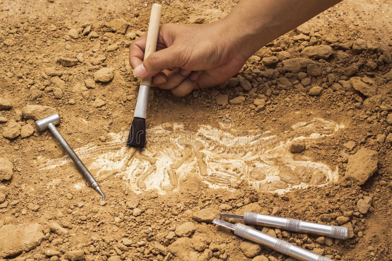 Skeleton and archaeological tools.Training for dig fossil.Simula stock photography