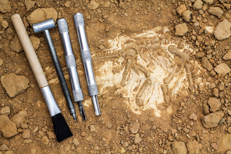Skeleton and archaeological tools.Training for dig fossil.Simula. Ted same as real digging royalty free stock photography