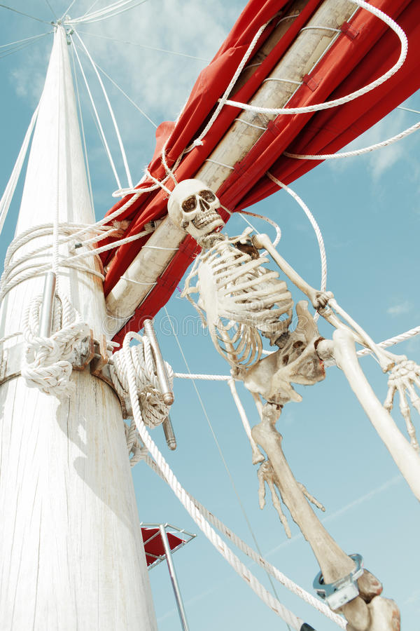 Skeleton. Close up view of human skeleton hanging out in summer environment stock image