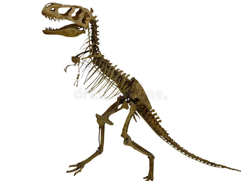 Skeleton of the dinosaur stock photography