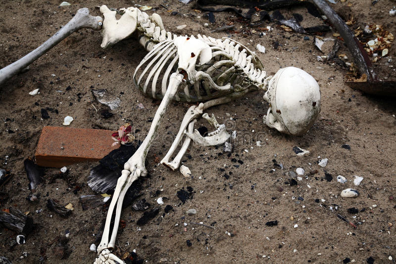 Skeleton in dirt. bones and skull from dead man royalty free stock photo