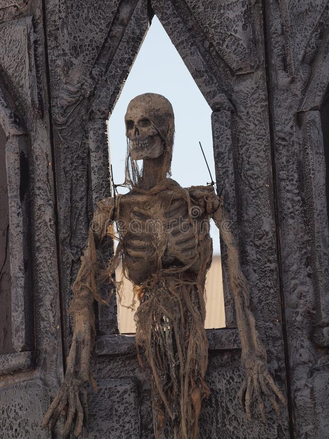 Skeleton stock images