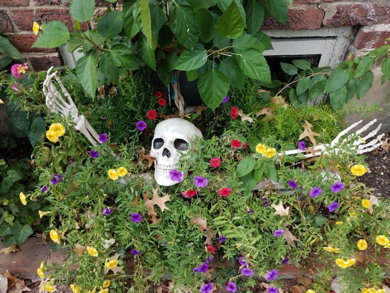 Skeleton head and bones Halloween decoration in flowers. Or plants stock photo