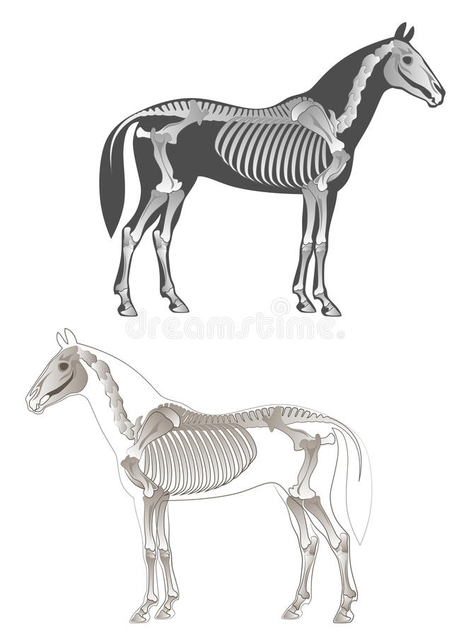 Skeleton horse stock illustration
