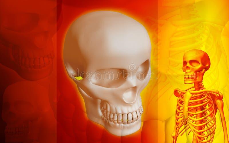 Skeleton and human Skull vector illustration