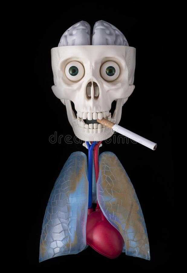 Skeleton, human skull in the teeth of a cigarette, dirty lung, heart and brain on a black background royalty free stock photography