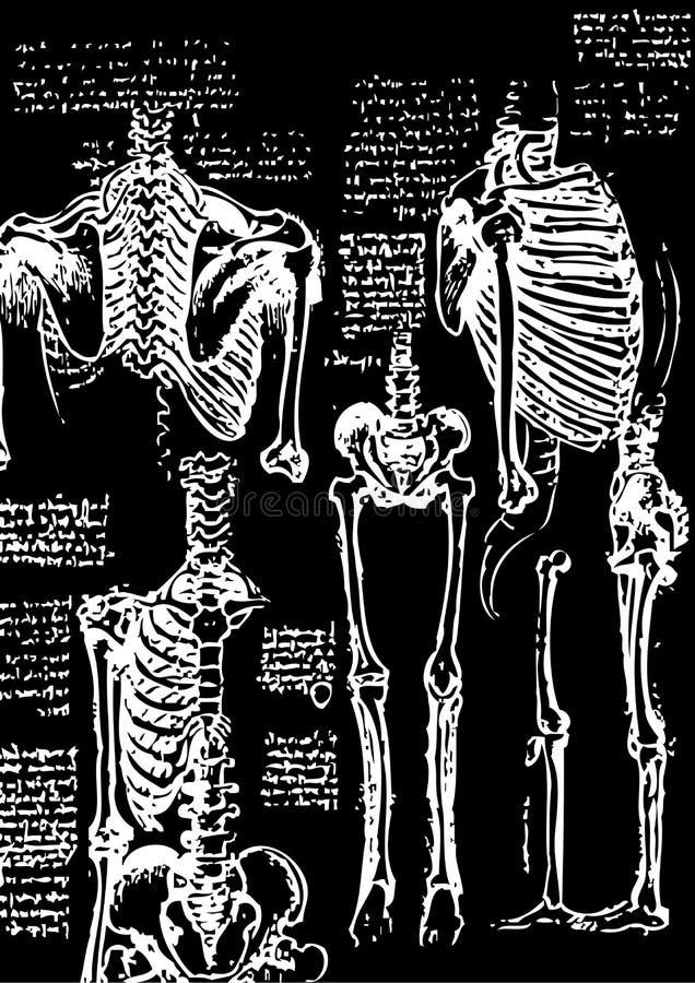 Download Skeleton illustration stock illustration. Image of white - 10341229