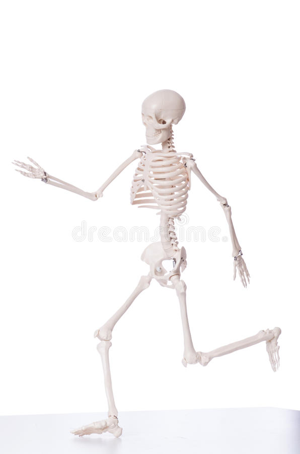 Download Skeleton isolated stock photo. Image of health, medicine - 29368830