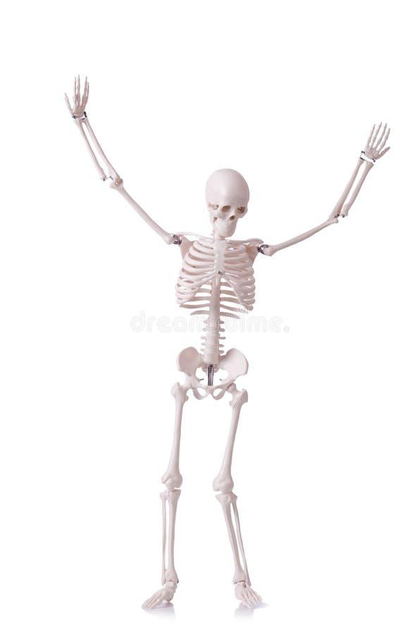 Download Skeleton stock photo. Image of science, bone, background - 30220084