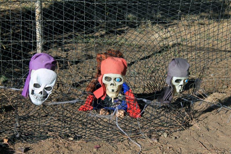 Skeleton Köpfe des Piraten, die aus den Boden herauskommen lizenzfreies stockfoto