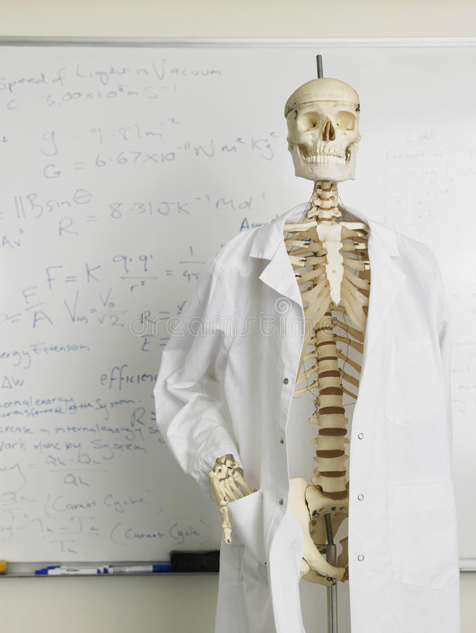 Download Skeleton In Lab Coat In Front Of Whiteboard Stock Photo - Image: 31829090