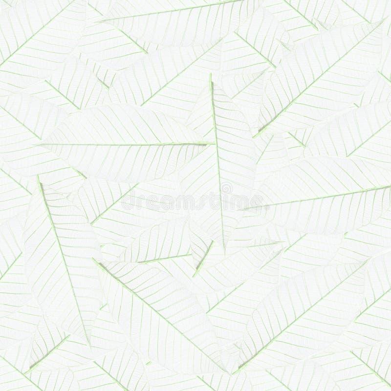 Download Skeleton leaf stock image. Image of colorful, pinnate - 19763729