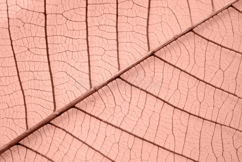 Skeleton leaf stock photography