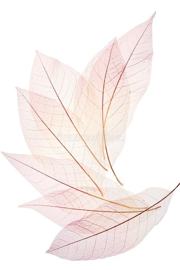 Skeleton leaf background stock images