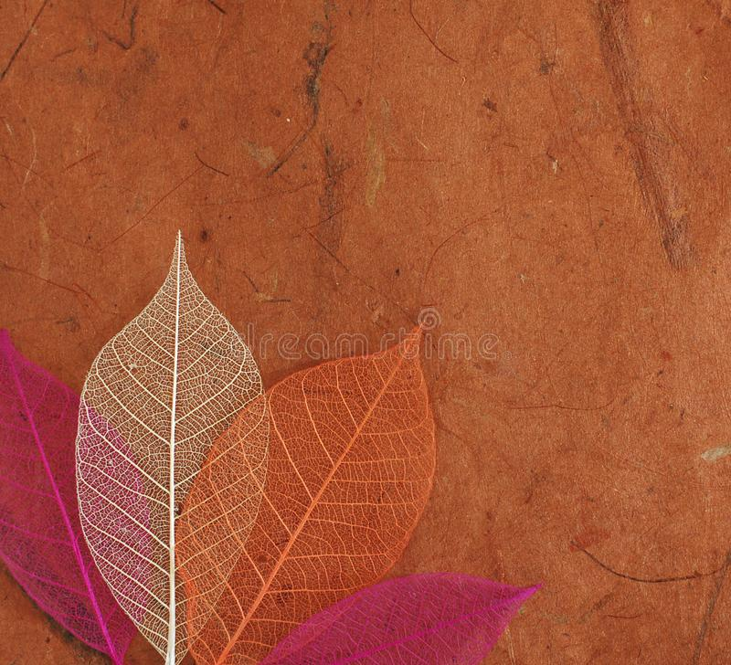 skeleton leaves royalty free stock images