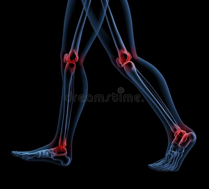 Skeleton Of Legs Walking Stock Images