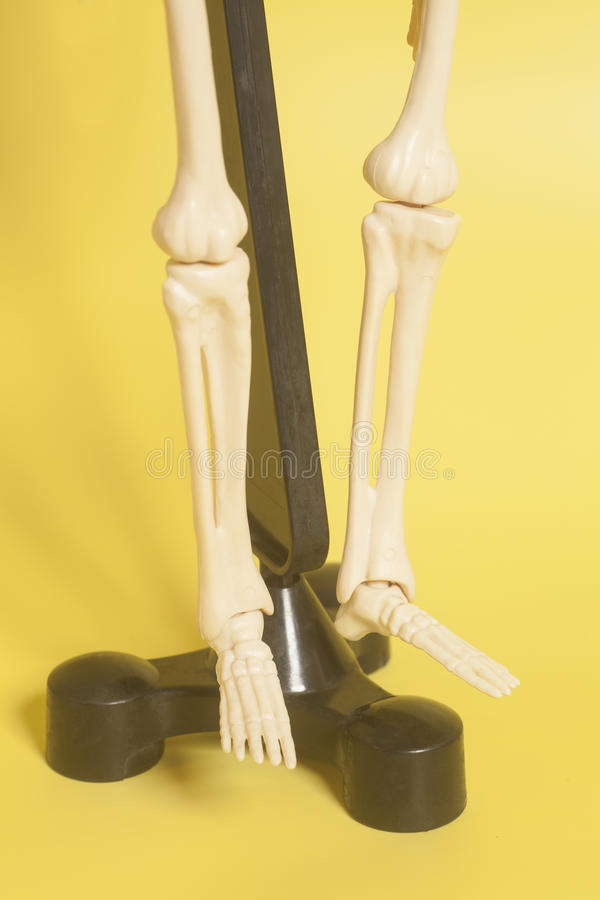 Skeleton legs. On yellow background royalty free stock image