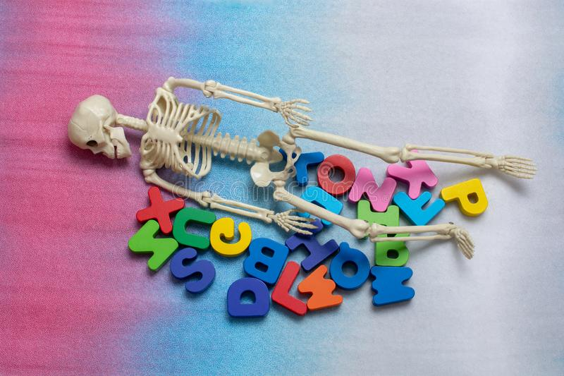 Skeleton model on colorful letters on colorful background royalty free stock image