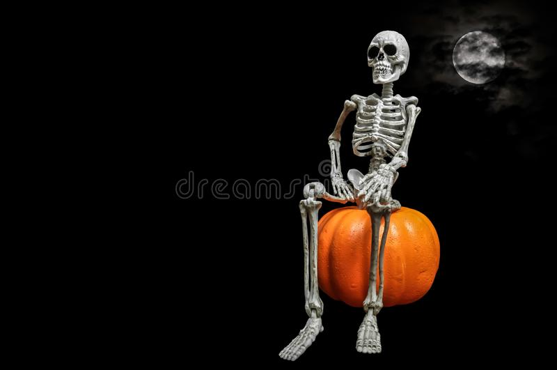 Skeleton Portrait royalty free stock photography
