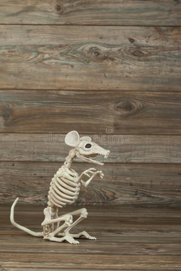 Skeleton rat with copy room royalty free stock images