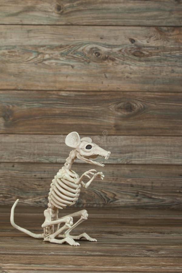 Skeleton Ratte mit Kopierraum lizenzfreie stockbilder