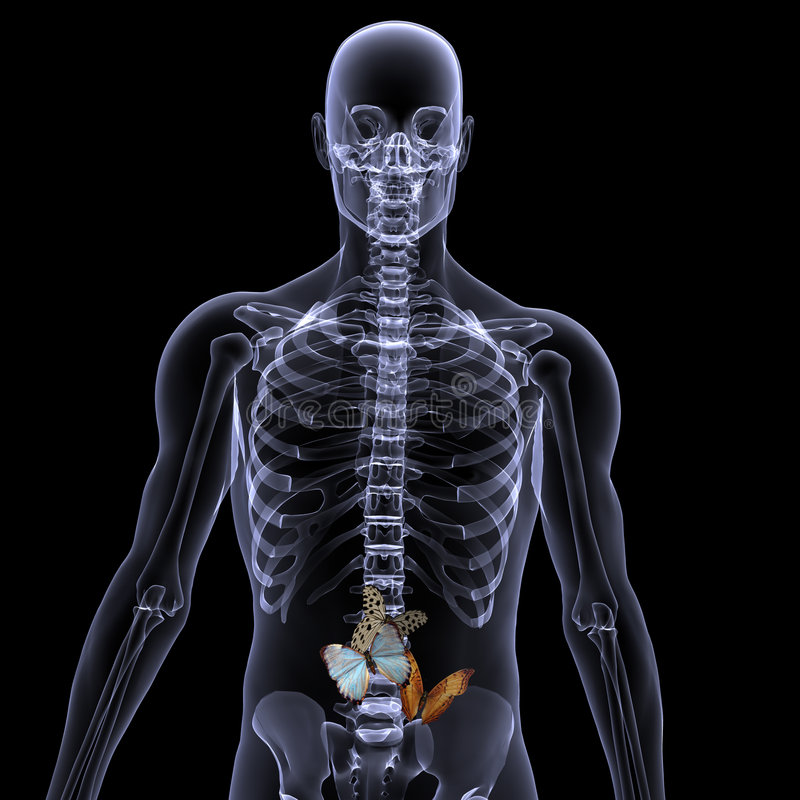 Skeleton X-Ray - Butterflies in your stomach royalty free stock photography